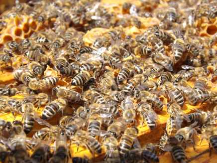 bees-beehive-beekeeping-honey-48022.jpeg